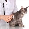 Ветеринарные клиники в Гурском